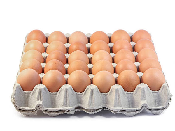 manual egg tray production line application
